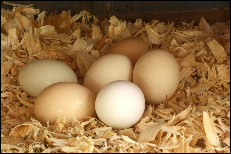 Do Fresh Brown Eggs Need To Be Refrigerated