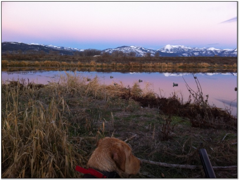 Duck Hunting Jackson Hole Wy