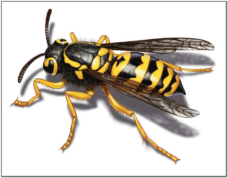 How To Get Rid Of Yellow Jackets In House