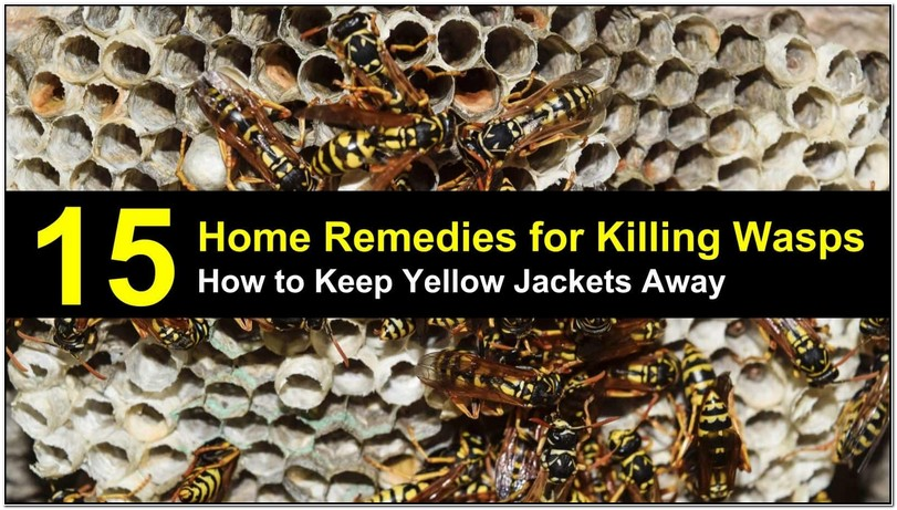 How To Get Rid Of Yellow Jackets In Shrubs