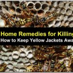 How To Get Rid Of Yellow Jackets In Your Yard